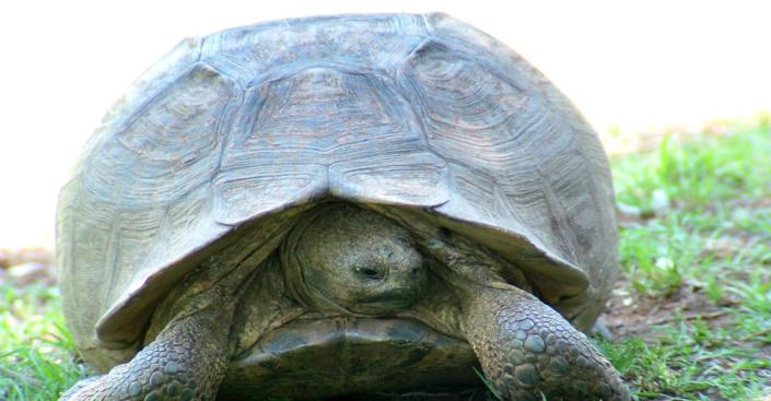 Handling Tortoises