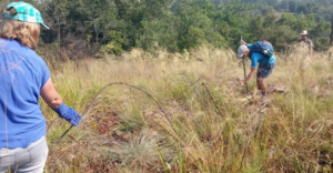 Hard at work on a Snare Walk in the Crocodile River Reserve