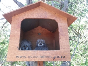 Ecosolutions Owl Box